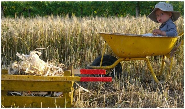 diy wheelbarrow sitting