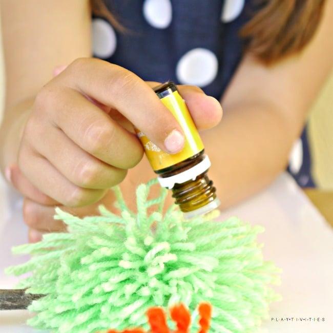 pom pom flowers essential oils