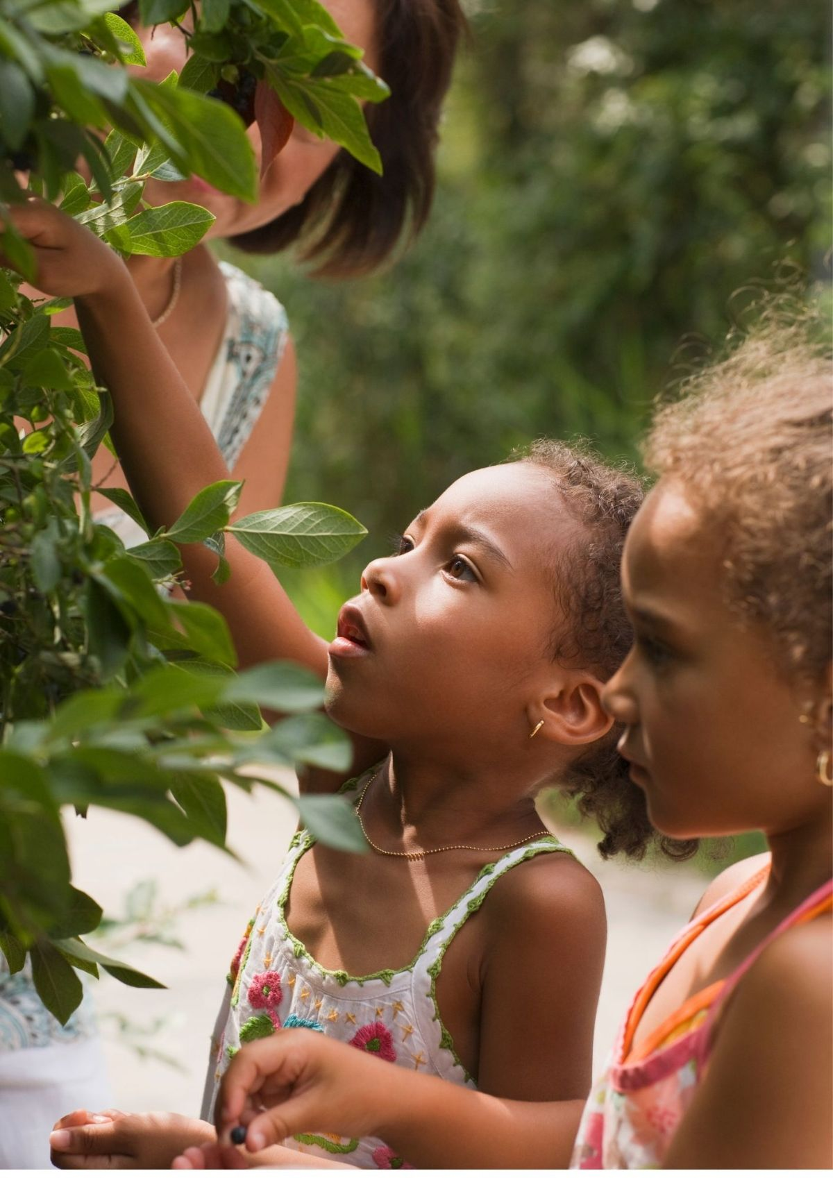 2 girls and a women pick berries from a tree