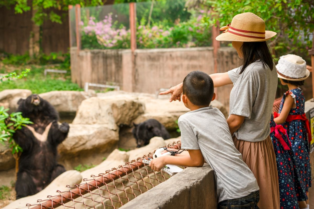 a woman and two children stand by a wall and point at a bear in a zoo enclosure