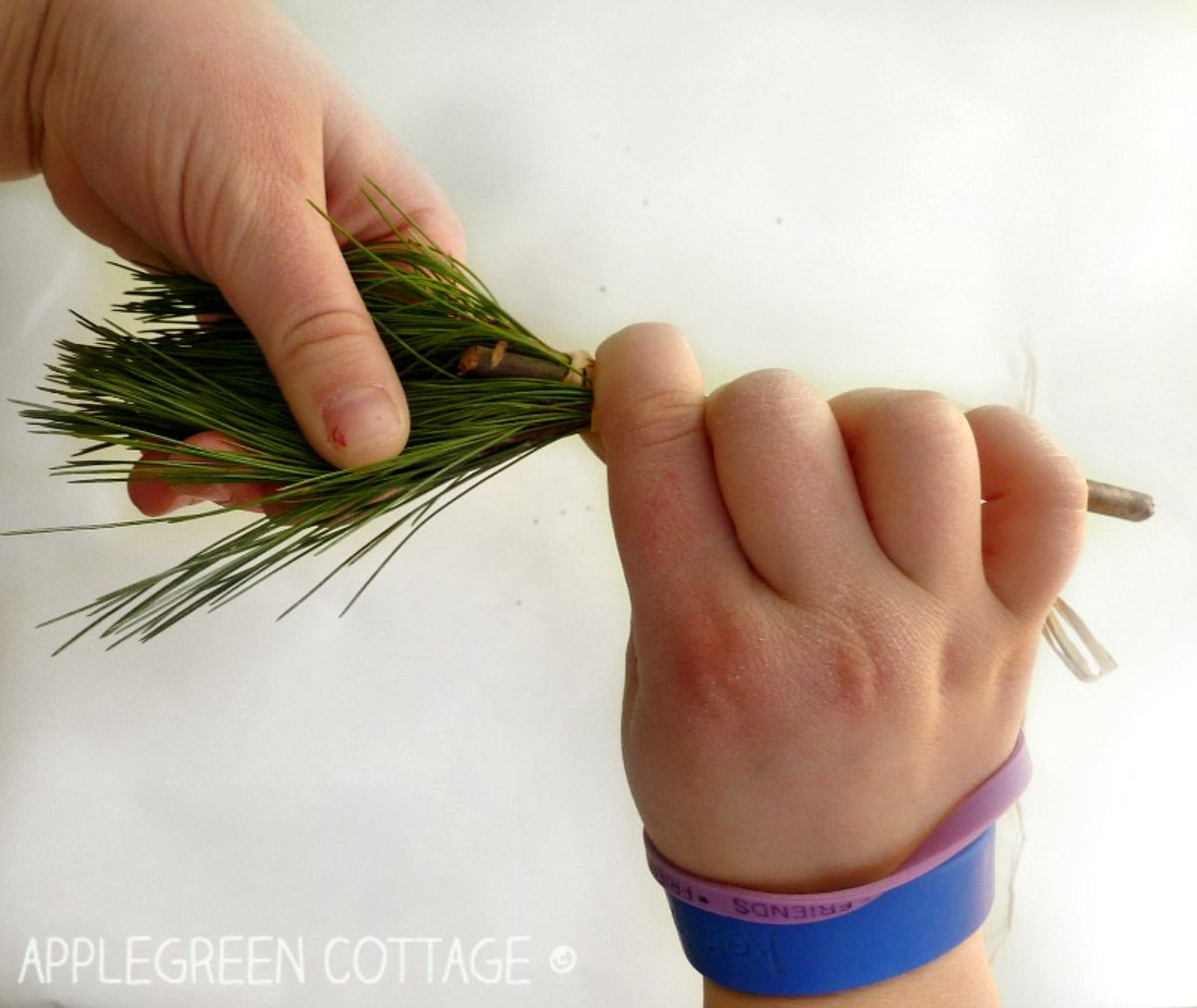 two hands hold pine needles and a twig, forming them into a paintbrush