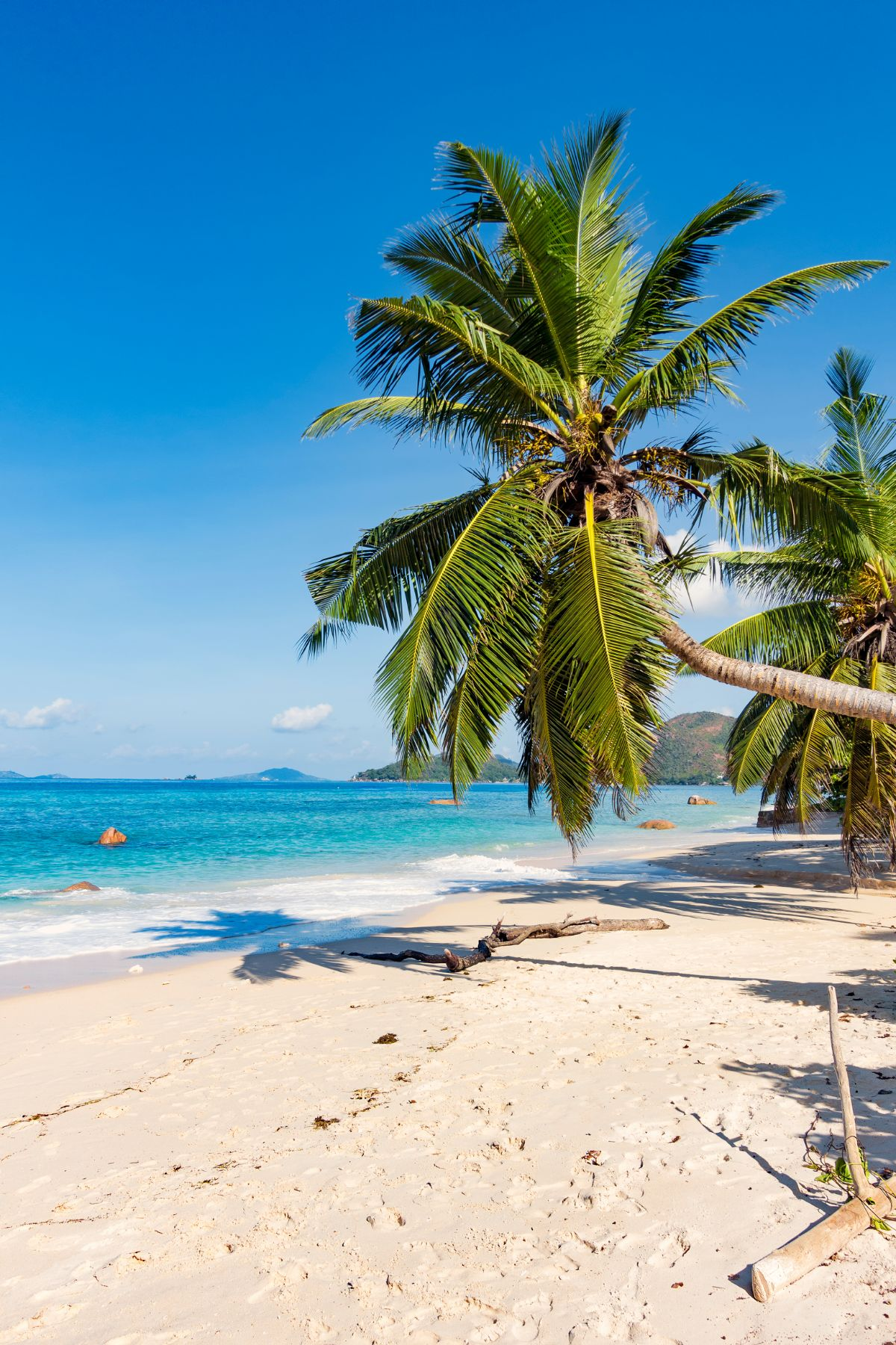 An image of a tropical beach with dark blue skuy sand and palm trees.