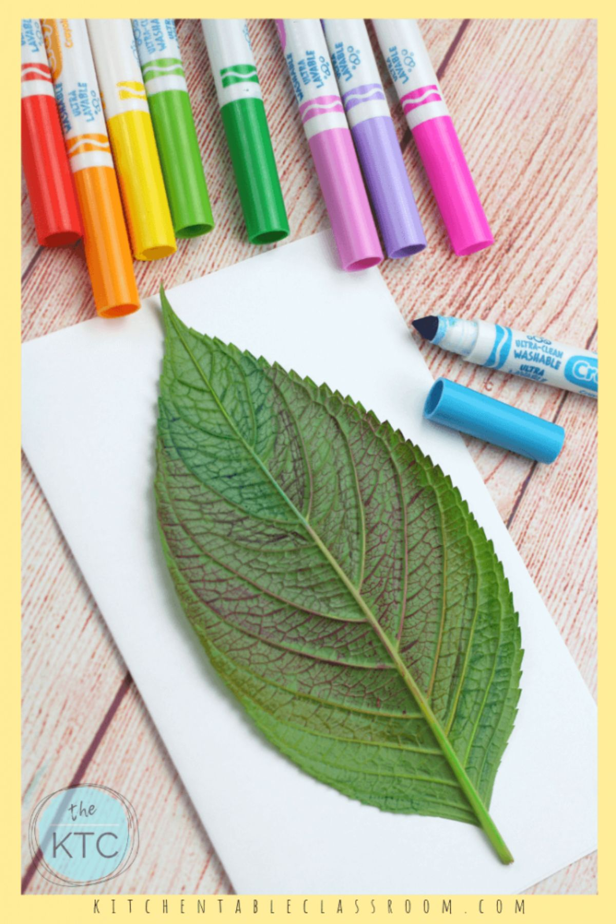 a large leaf is laid on a piece of paper. marker pens are sitting next to it