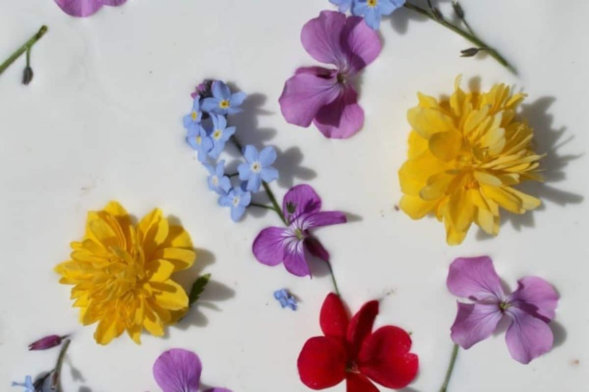 wild flowers swim in a sea of white cornflour and water mix