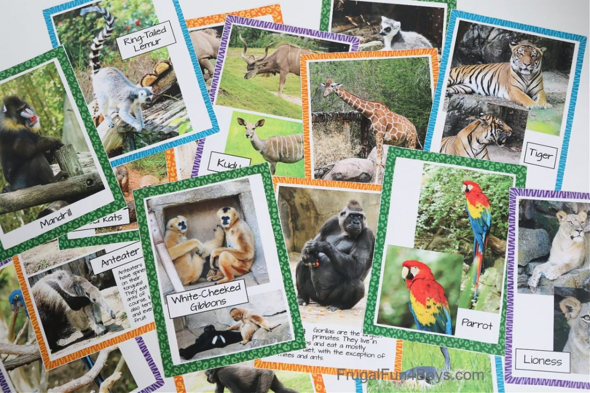 scattered bordered cards with photos of animals on them, each labelled
