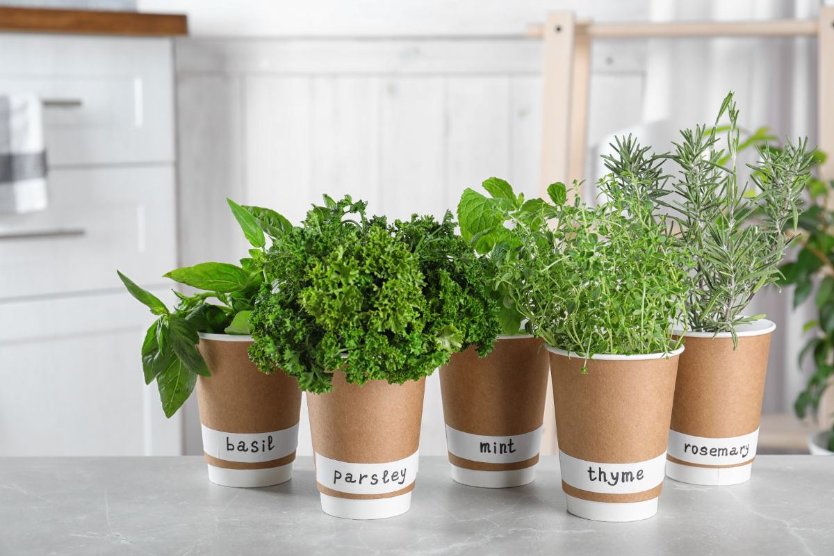 on a kitchen counter are 5 brown paper cups filled with different herbs. They are labelled Basil, Parsley, Mint, Thyme and Rosemary