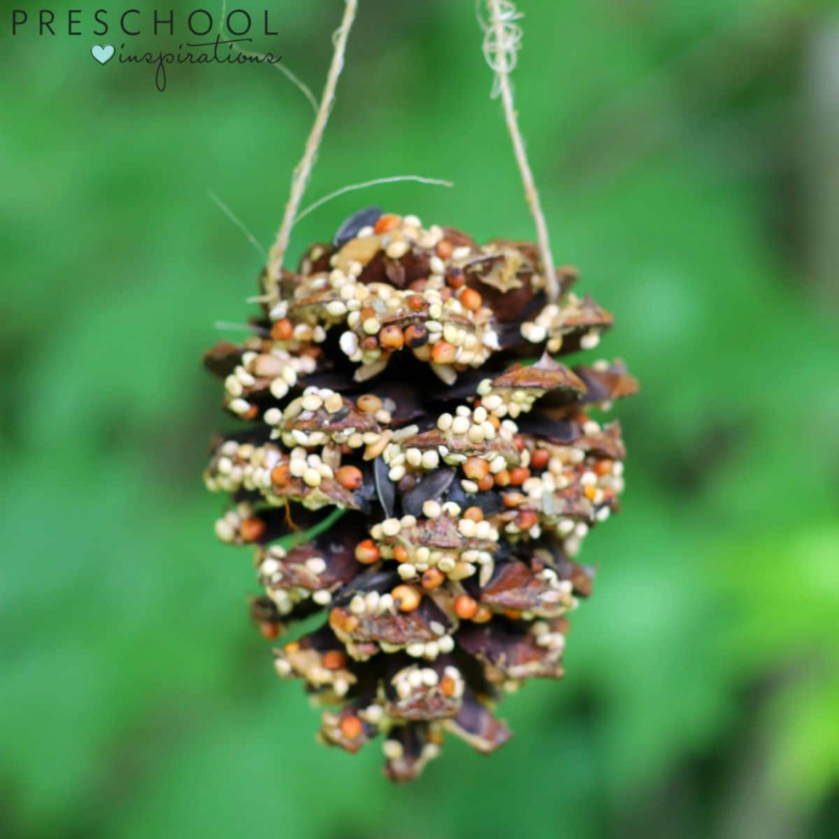 a pine cone filled with seeds hangs from the top of the photo